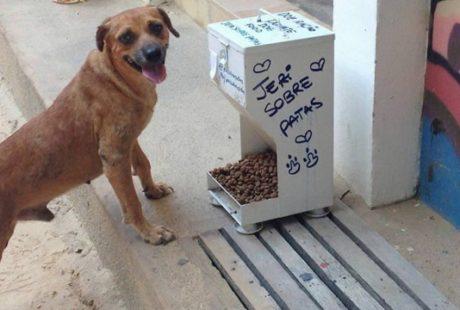 Moradores de Jericoacoara distribuem comida para animais abandonados