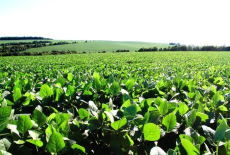 Prazo para liberação de custeios agrícolas está na reta final