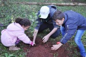 Foram plantadas 100 mudas de árvore na área do Grêmio Aquático de Carazinho